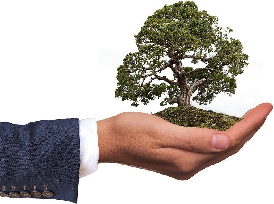 Mann hält Baum - Umweltfreundlichkeit des EcoDesign