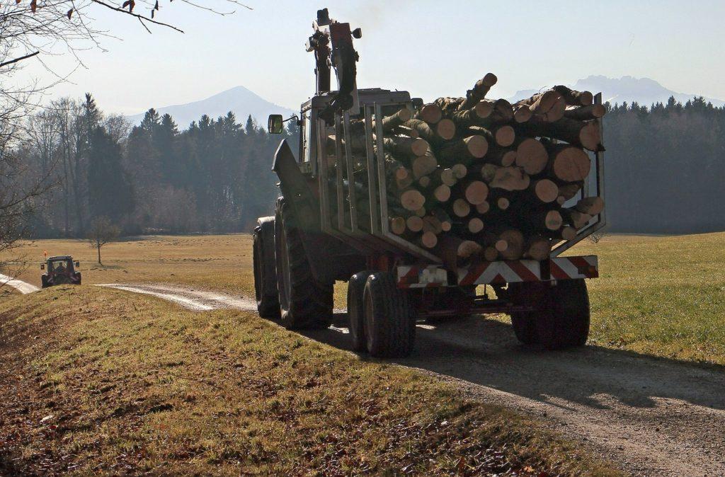 Kaminholz vom örtlichen Holzhof oder Forstamt kaufen